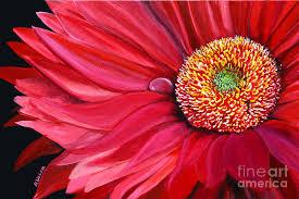 gerbera daisy painting red gerbera by natasha moustasha walsh