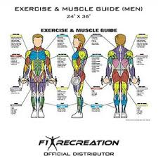 Exercise Chart For Men Fitness Posters Archives F1 Recreation