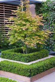 Small Picture Best 25 Maple tree ideas on Pinterest Landscaping trees