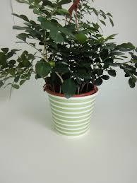 Flower Paper Mache Green Cross Stripe Flower Paper Pot For Plant Paper Mache Flower Pot