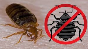 How To KILL Bed Bugs How to Get Rid of Bed Bugs Fast and Easily ...