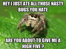 Friendly spider - Meme Picture | Webfail - Fail Pictures and Fail ... via Relatably.com