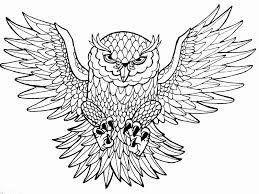 Uil Tekening Uniek Uil Tekening Tattoo Archidev Kleurplaatsite