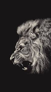 wallpaper weekends lions and tigers no bears