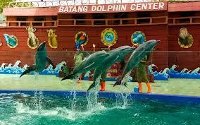 Tgl 29 agustus kemaren ane dapet perintah dari kantor pusat untuk meeting ke comal, pemalang. Batang Dolphin Center Tiket Atraksi Januari 2021 Travelspromo