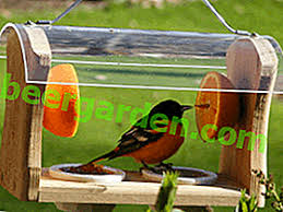 За пъдпъдъци, декоративни птици, малки пилета и др. Kak Da Napravite Hranilka Za Ptici Ss Sobstvenite Si Rce Ulichni Drveni Risunki Sgradi 2021