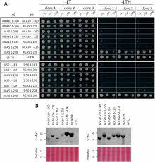 Mla 10 Cytosolic Activation Of Cell Death And Stem Rust Resistance By