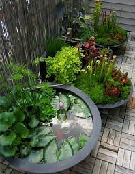 ponds backyard container water gardens