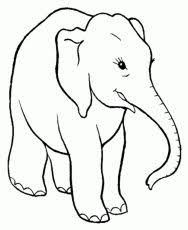 Small Picture In this site you can find numerous printable elephant coloring