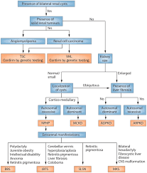 Frontiers Cystic Kidney Diseases From The Adult
