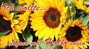 Sonnenblume Hallo Grußkarten E Cards Postkarten Blumengrüsse