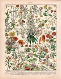 Botanical Chart Print 1897 Garden Flowers Antique Botanical Print Flower