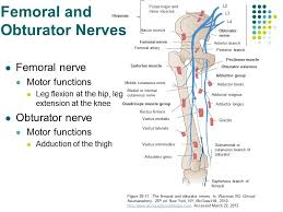 Leg Muscle Innervation Chart Accessphysiotherapy Lumbar And Sacral Plexus With Clinical