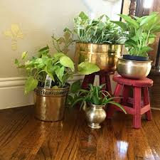 Small Picture The 25 best Indoor plants india ideas on Pinterest Plants