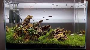ada cube garden 60 p