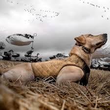 Rigem Right Bloodline Hunting Dog Vest Gander Outdoors