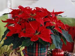 Global Christmas Soviel Weihnacht War Noch Nie