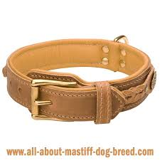 tan leather dog collar with rustproof brass fittings