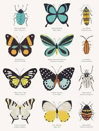 Insects Chart Sabina Radeva