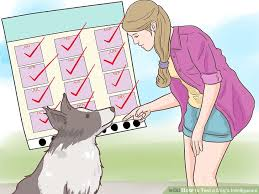 How To Test A Dogs Intelligence 15 Steps With Pictures