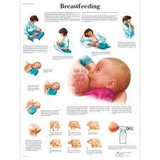 Breastfeeding Chart