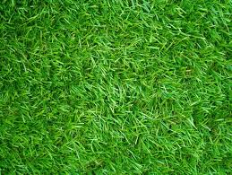 Artificial Grass Field Top View Texture Stock Photo Colourbox