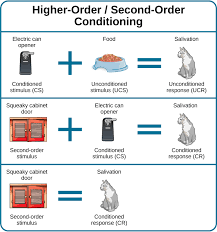 "classical conditioning a diagram is labeled ""higher order second order conditioning"" and has classical conditioning"