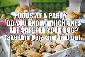 test yourself do you know which party foods are safe for dogs do you know which party foods are safe for dogs take the quiz