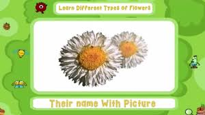 learn diffe types of flowers and their name with picture for kids you
