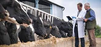 Feed quality through animal feed testing and feed protection ...