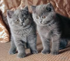 курсовая по оперативной хирургии кастрация кота Кот и Кошка как сделать из бумаги кошку для детей