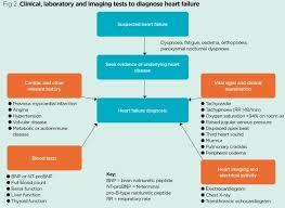 Right Vs Left Sided Heart Failure Chart Heart Failure 1 Pathogenesis Presentation And Diagnosis