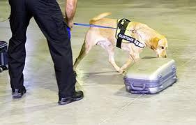 खोजी कुत्ता 5