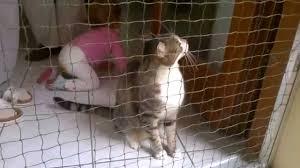 Katzengitter Fur Fenster Dachfenster Katzenschutz