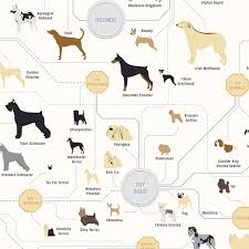 Dog Breed Chart The Diagram Of Dogs By Pop Chart Lab An Art Print Featuring
