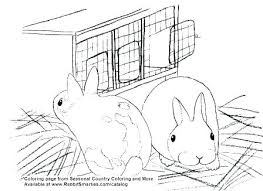 realistic rabbit coloring pages. Contemporary Realistic Baby Rabbit Coloring Pages Realistic Bunny  Sheet Kids  On H