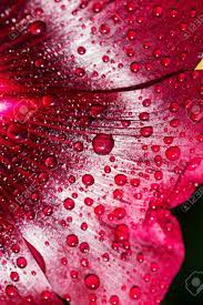 Wallpaper For Your Desktop. Water Drops ...
