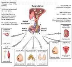 non steroid hormones wiki