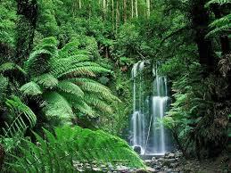 Resultado de imagen de fotos de paisajes de bosques