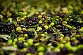 """Résultat de recherche d'images pour """"olives"""""""