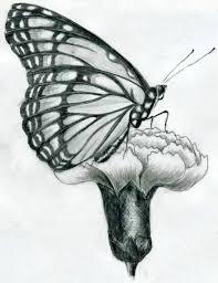 Disegni Da Copiare Facili E Belli Schizzo A Matita Di Una Farfalla