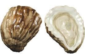 a clean well lighted oyster bar lucky peach a clean well lighted oyster bar every oyster is a moment of stillness