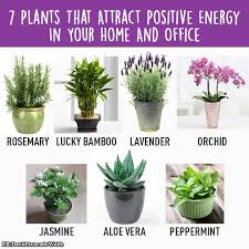feng shui plant office. home gym 7 plants that attract positive energy in your and office feng shui plant n