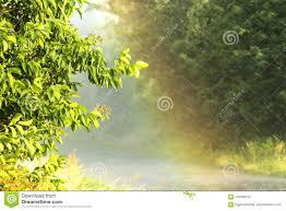 Forte Pluie Dans L'heure D'été Photo stock - Image du arbre, soleil:  118509102
