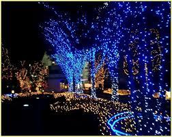outside christmas lighting. outside led christmas lights outdoor blue and white light treetop with lighting