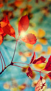 Autumn Phone Wallpapers - Top Free ...