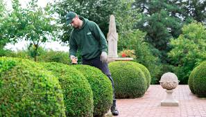 best garden plants.  Best Best Gardening Trends 2017 First Inside Best Garden Plants O