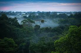 The Story Behind How the Amazon Rainforest Got Its Name