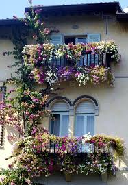 Best 25 Climbing Hydrangea Ideas On Pinterest  Vines Hydrangea Climbing Plants For Privacy