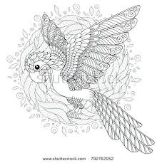 Adult Bird Coloring Pages Coloring Pages For Birds Coloring Pages